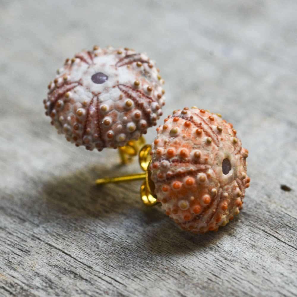 sea urchin studs